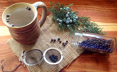 Можжевельник: лечебные свойства и противопоказания, применение и рецепты