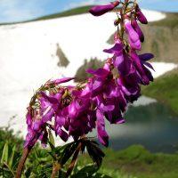 Цветок изгибается на фоне горы