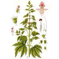 Строение растения на рисунке