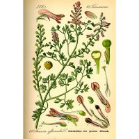Дым-трава на старинной иллюстрации