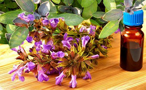 Цветы буквицы лекарственной