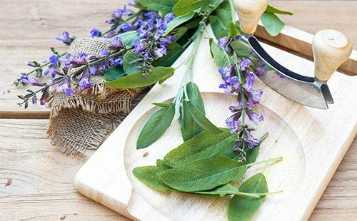 Цветы и листья буквицы