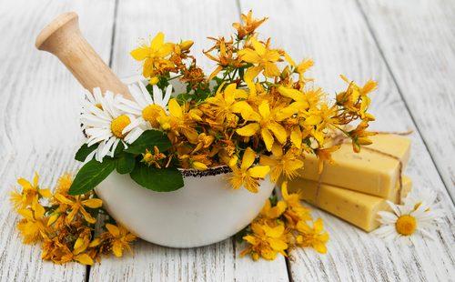 Свежие цветы зеробоя