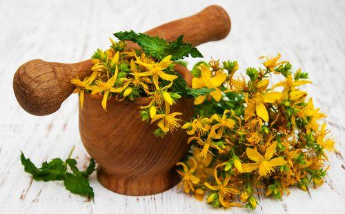 Цветы лекарственного зверобоя и ступка