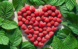 Лечебные свойства листьев малины, инструкция сбора, хранения да применения сырья