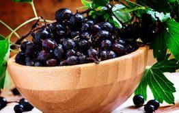 Лечебные свойства листьев смородины: какое вербовать сырье, в некоторых случаях да как употреблять